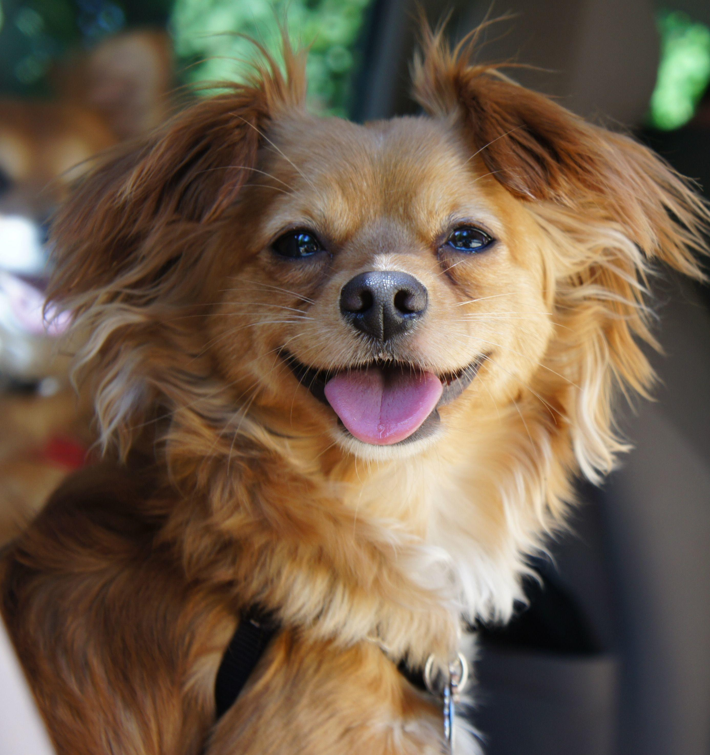 Small Dog Playgroup Seattle