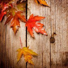 Autumn L.