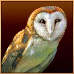 Golden Owl E.