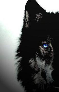Wolf L.