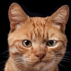 Cat S.