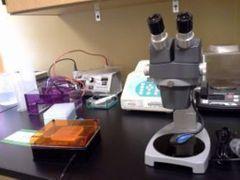 Wet Lab C.