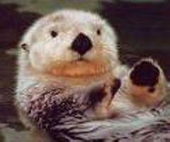 OttersRock
