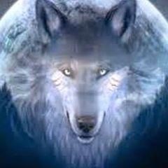 Wolf P.
