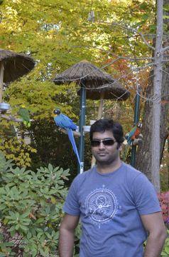 Damodhar M.