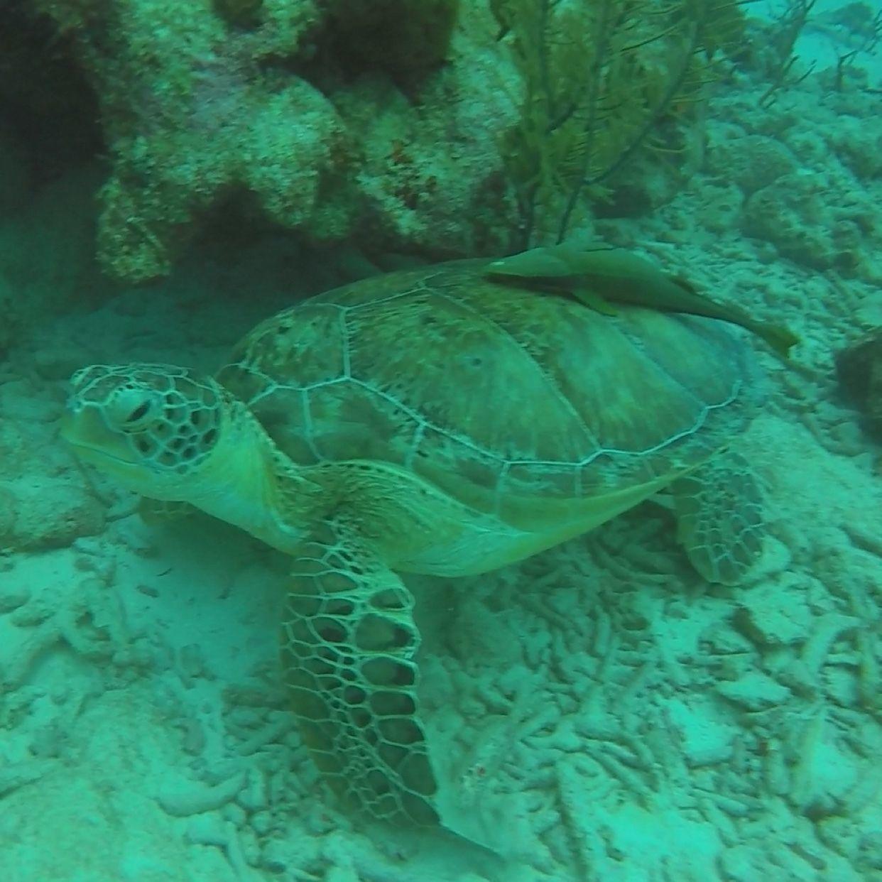 Frank R Scuba Connection Dive Team Bergenfield Nj Meetup
