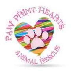 Paw Print Hearts Animal R.