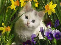 Catty T.