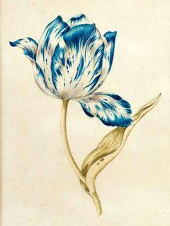 Azul C.
