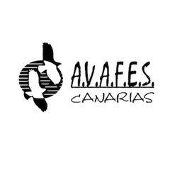 Avafes C.
