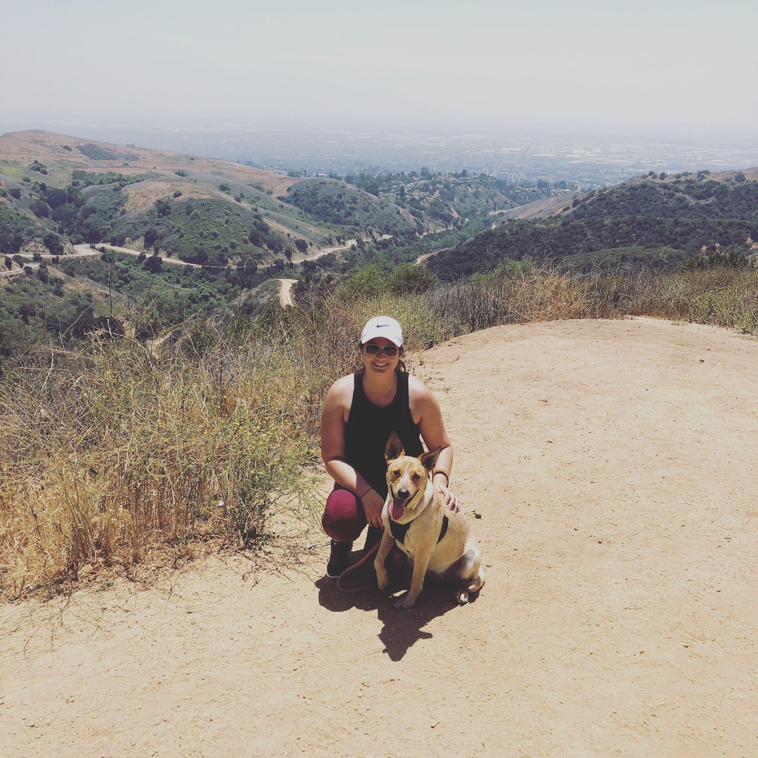 Falco Dog Training Orange County