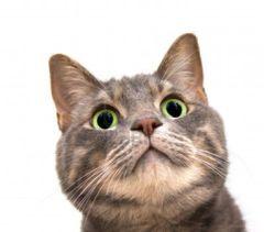 Cat F.