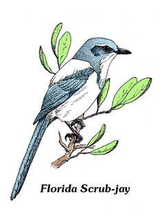 Flagler Audubon S.