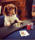 Bulldog Poker C.