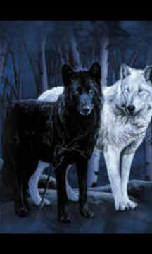 Winter Wolf (.