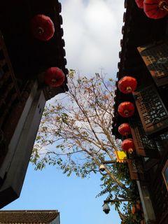 XiaoHu P.