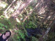 tree w.