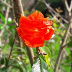 Suriname V.