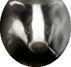 Badger M.