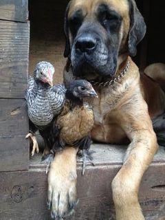 Brooklyn Chicken F.