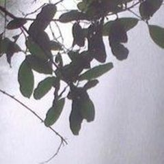 Thamilarasu K