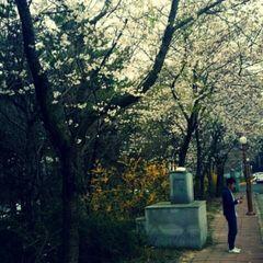 Dongjoon  K.