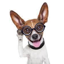 thecodingdog