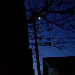 Moon L.
