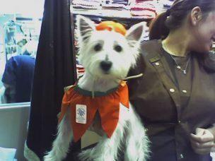 Sherry C  - With Our Westies! (WOW!) (New York, NY) | Meetup