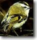 Black Hills Audubon S.