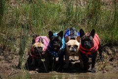 French Bulldog groups | Meetup