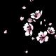 Shiori H.