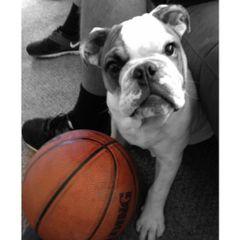 weezy_thebulldog