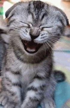 Laughologist