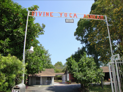 Divine Art of Yoga C.